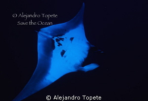 Manta Ray in Black, Roca Partida Mexico by Alejandro Topete 